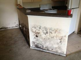 Ft Lauderdale Mold Experts on the Dangers of Mold in Your Home